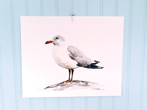 Seagull, SOLD