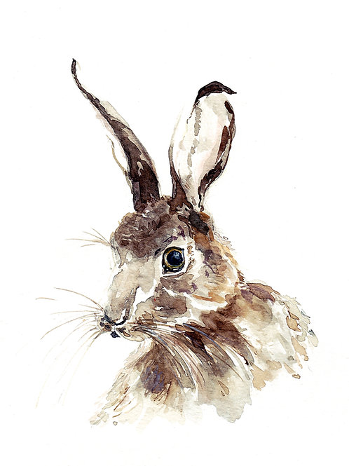 "Hare, ART PRINT, 8"" x 10"""