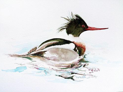 ART PRINT, Merganser Duck