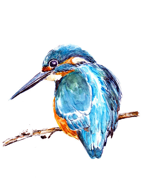 "Kingfisher, Art Print  8"" x 10"""