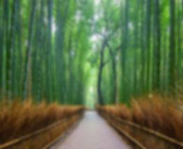 foret-bambou.jpg
