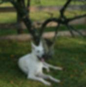 Dog restng under favorite tree