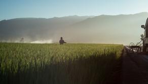 Ny folder viser vejen til pesticidfri drift og adfærd