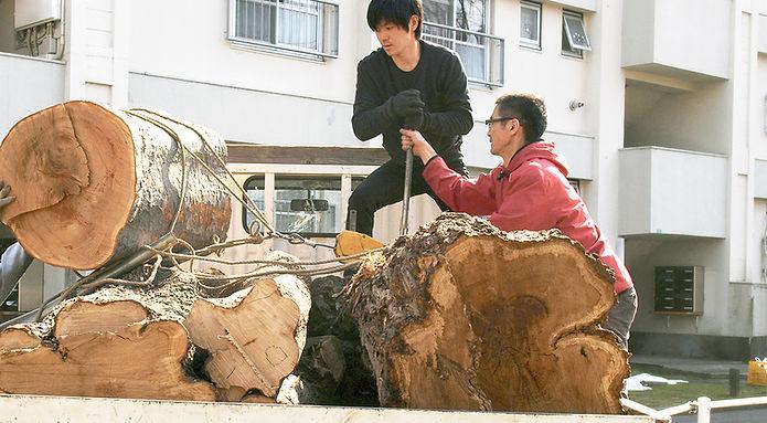 伐られた丸太の運搬作業
