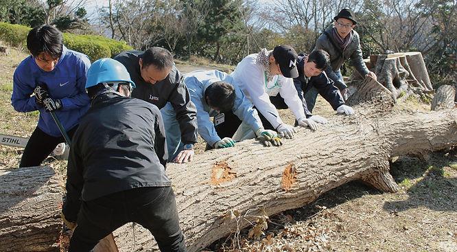 伐採されて横たわっていたエノキやコナラの木を切り出して運び出す作業