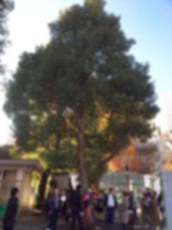 樹木カルテ