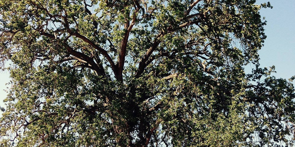 """The Eagle Valley Land Trust Book Club and """"Tree"""" by Melina Sempill Watts"""