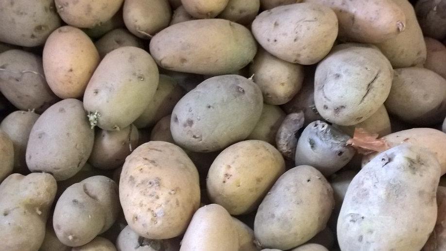 pomme de terre charlotte bio 1kg