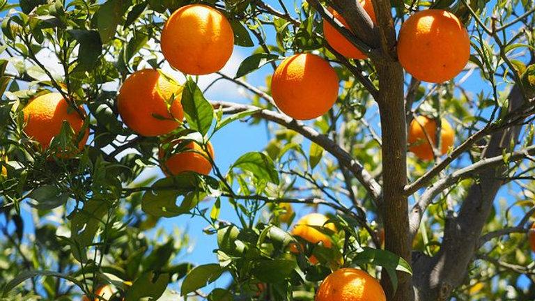 Oranges 1kg Navelina