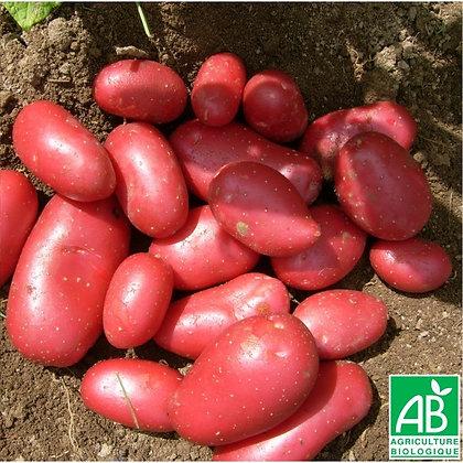 pomme de terre  Dalida AB 1kg