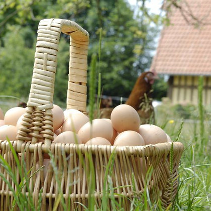 6 oeufs AB de poules élevées en plein air Gros calibre