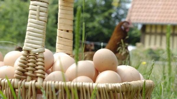 6 oeufs de poules élevées en plein air
