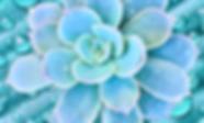 Baja Catus_edited.png