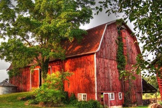 Barn Wood.jpg