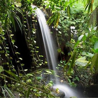 Rainforest Blossom.jpg