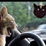 Cat-Car Fragrance