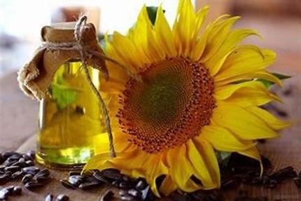 Sunflower.jpg