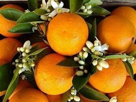 Patchouli Orange.jpg