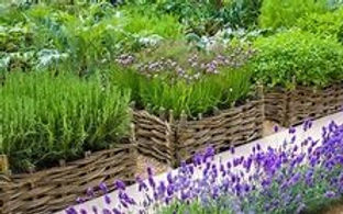 Herb Garden.jpg