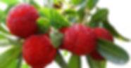 Bayberry.jpg