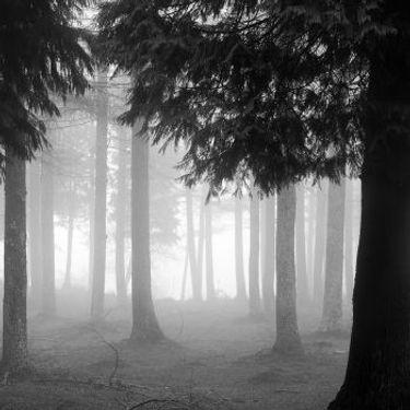 Black Cypress & Cassis.jpg