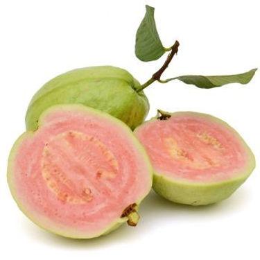 Hibiscus Guava.jpg