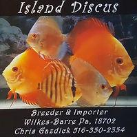 Island Discus.jpg