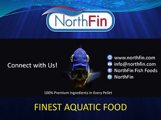 Northfin banner.jpg
