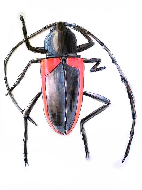 Kleines Insekt ganz groß