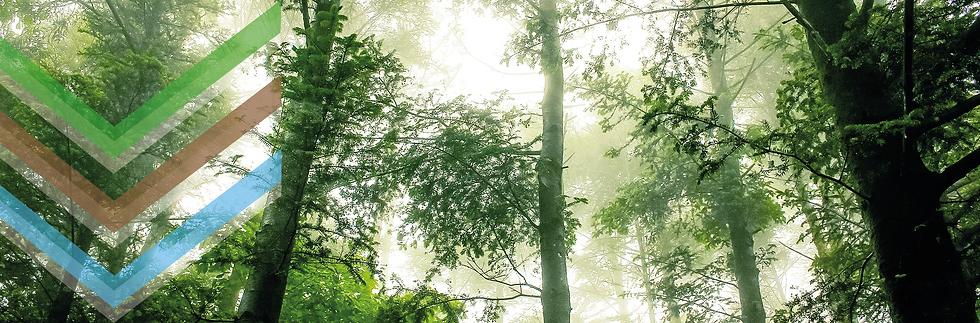 Forêt baignée de lumière du soleil