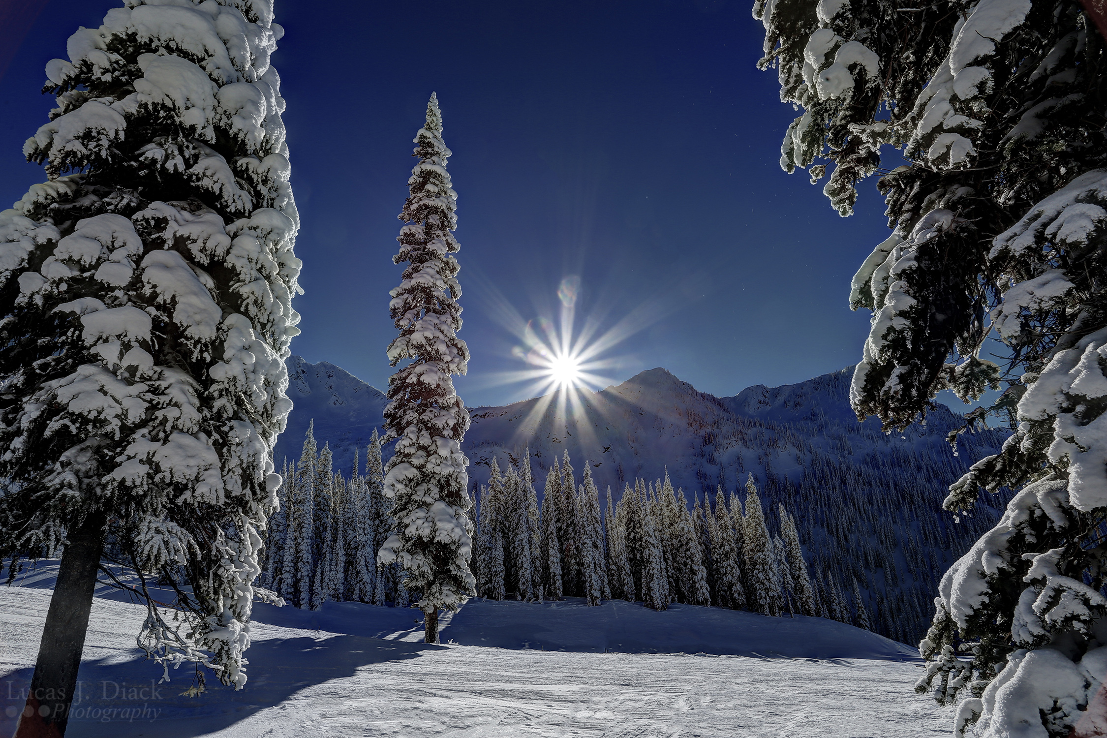 Winters Sun (Vancouver Photography)
