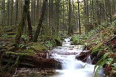 Forest, stream, waterfall, british columbia, pacific northwest
