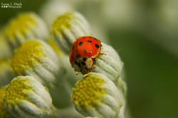 Patient Ladybug