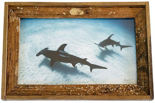 Recycled trap wood frame, Hammerheads, Florida keys 12x15