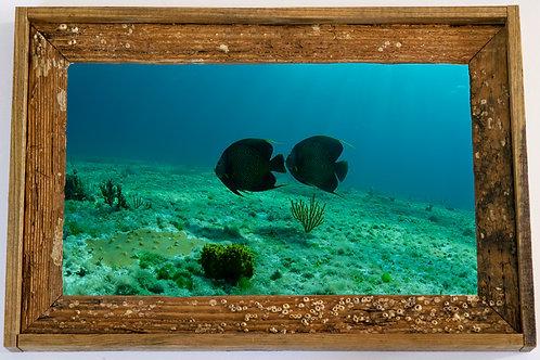 Recycled trap wood frame, Angel fish, Florida keys,15x20
