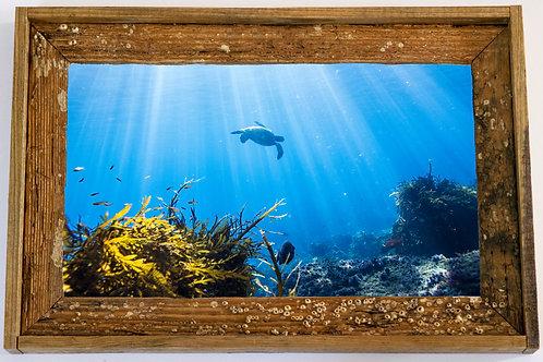 Recycled trap wood frame, Turtle sun rays, Florida keys 12x15