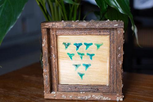 Shark tooth, small frame, Florida keys , Small frame size 6x6