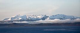 geese in flight.jpg