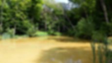 woodland_edited.png