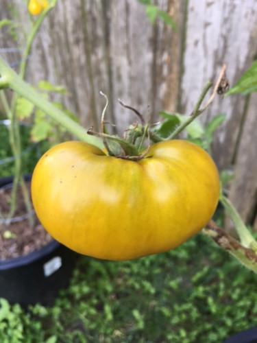 Kearley Seeds & Pepper Co , Vegetable Seeds