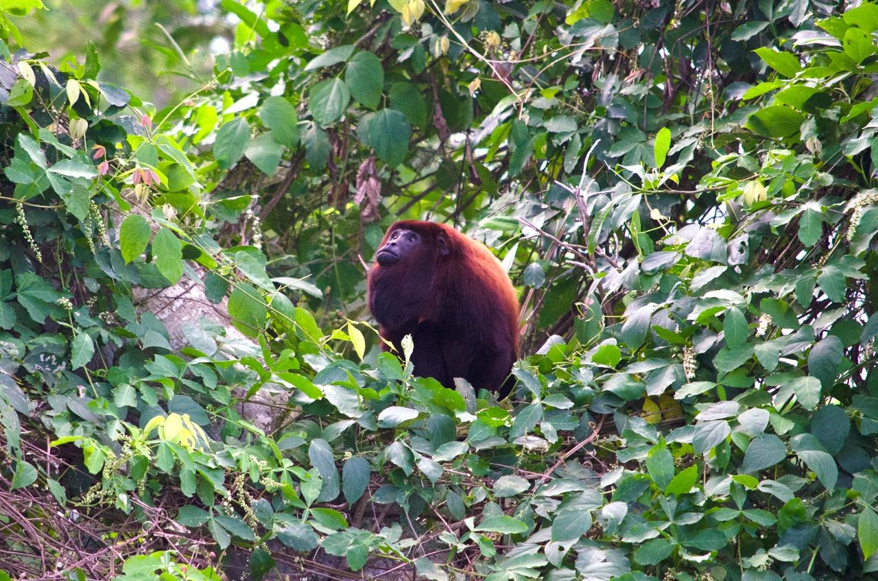 Singe Réserve naturelle, Colombie