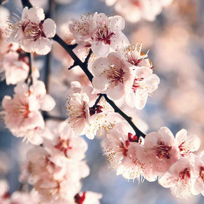 Primavera: uma boa hora para começar um projeto de leitura