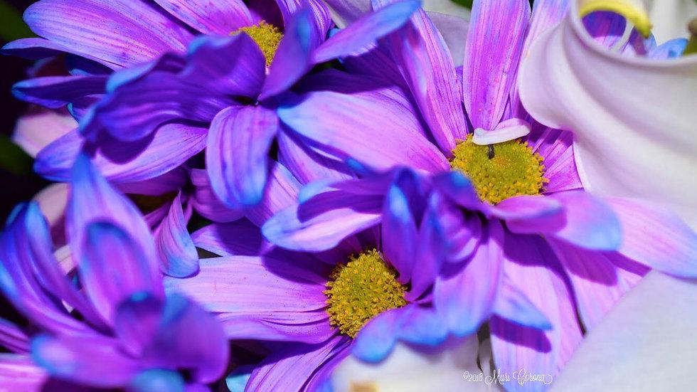 Violet Passion