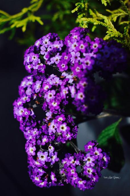 Purple Spots