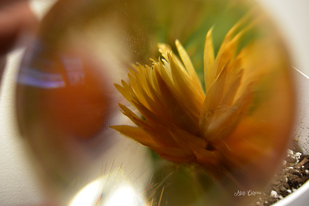 Cactus in a Glass1