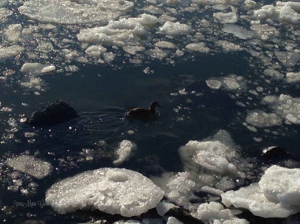 Duck and the Chunk of Ice