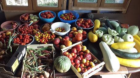 Production de légumes