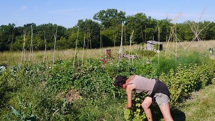 Premières tentatives de productions de légumes.