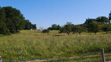 Arrivée sur le nouveau terrain qui à l'époque n'était qu'une simple prairie...
