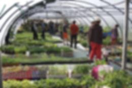 La serre à plants en pleine production